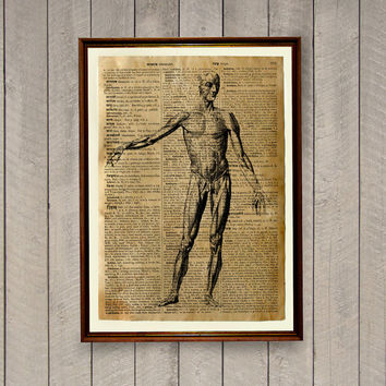 Human anatomy poster Medical illustration Rustic vintage decor