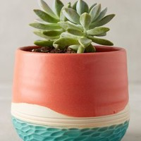 Beachview Planter by Unurth Watermelon One Size Garden