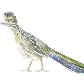Roadrunner Watercolor - Texas Art - Landscape format