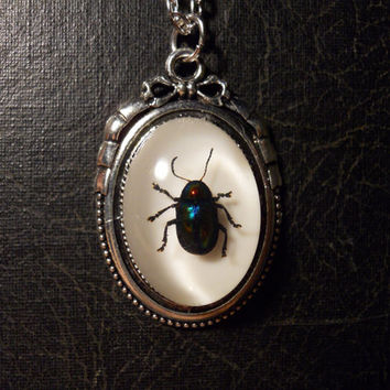 Tiny Bow Rainbow Beetle Preserved Scarab Specimen Cameo Necklace