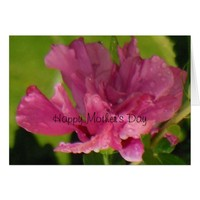 Rose of Sharon Happy Mother's Day Card