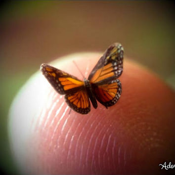 "Sale- Monarch, Miniature Butterfly, Danaus Plexippus, Dollhouse Scale, 1:12, 1/4"" Wingspan, 6 mm, Micro, AdoreMini"