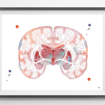 Brain watercolor print coronal section of the human Brain poster neurology giclee print brain anatomy art medical art illustration [398-6]
