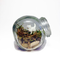 Recycled Kitten Jar Terrarium