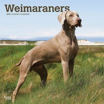 Weimaraners Wall Calendar, More Dogs by BrownTrout