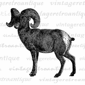 Printable Big Horn Sheep Graphic Digital Download Image Illustration Vintage Clip Art Jpg Png Eps  HQ 300dpi No.2559