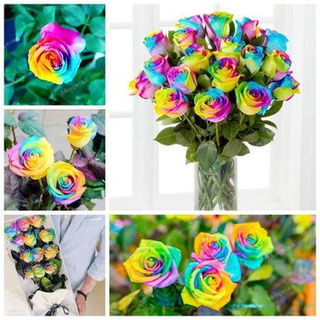 50 Seeds / Pack Rare Holland Rainbow Rose Seeds Of Perennial Rainbow Rose  Seeds For Flowers Potted Plant Bonsai Or DIY Garden