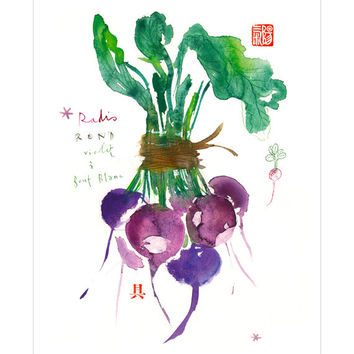 Vegetable art print, Radish watercolor painting, Kitchen wall hanging, Food poster, Botanical Purple home decor