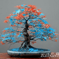 7 Kinds for choose!  20 pcs Rare blue maple Seeds Bonsai Tree Plants Pot Suit for DIY home garden Japanese maple seeds