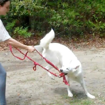 Redirection (Playtime) Leash --Never forget your Training Toy again!!