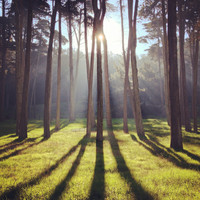 Presidio Forest Bathed in Sunlight 2
