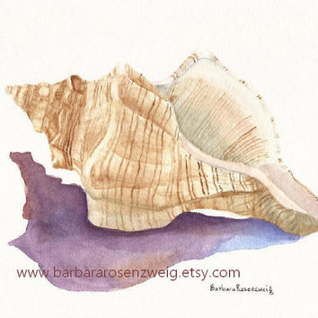 Seashell Painting, Conch Shell Art Print, Shell Watercolor Art, Beach House Decor, Barbara Rosenzweig, Etsy, Seashore Home Wall Decor Gift