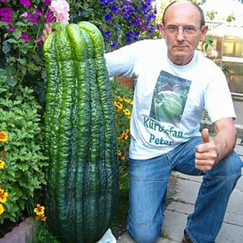 50 pcs hot sale rare giant cucumber seeds organic vegetable plants the budding Rate 90%,Seeds of perennial garden for garden