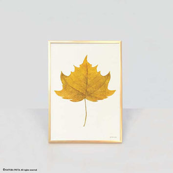 Maple leaf print-leaf print-watercolor yellow maple leaf print-fall print-autumn print-botanical print-home decor-autumn-NATURA PICTA-NPWP15