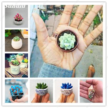 Hot 100pcs Rare Mini Succulents Seed Tetragonia Blue Stone Flower Seeds Lithops Pseudotruncatella Seed For Home Garden