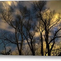 Enchanting Night Metal Print