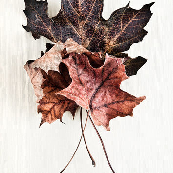 Nature Photography: Maple leaf autumn decoration, brown rustic decor, fall leaf