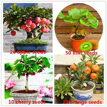 4 kind fruit,bonsai fruit tree seeds,vegetable and fruit seeds garden plant Delicious apple orange kiwi cherry total 100+ seeds