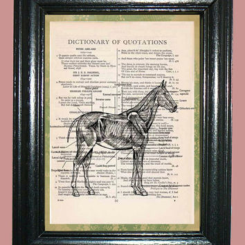 Anatomy of a Horse's Muscle Structrure Dictionary Book Page Art Print Beautiful Upcycled Page Art Illustration Art Print Home Decor