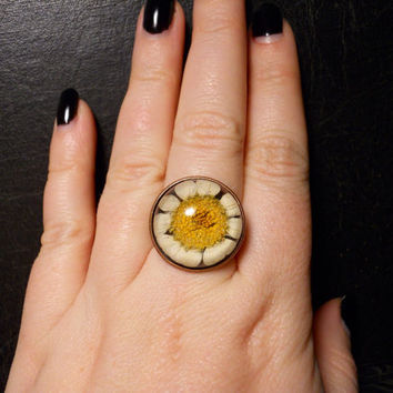 Tiny Real Preserved White Daisy Specimen Ring