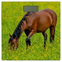 Brown Horse in the Meadow Bathroom Scale