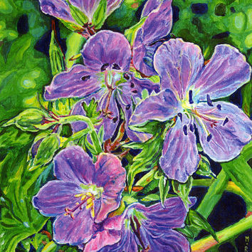 "Giclee print on canvas - Five Wild Geraniums - 8"" x 10"" - Signed/Editioned"