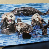 Sea Otter Canvas Photo Canvas 12x18 Fine Art Canvas Nature and Wildlife Photography