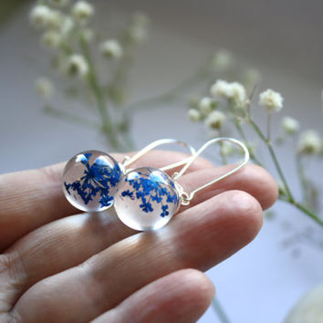 Real Queen Anne's Lace Resin Orb Earrings. Resin Sphere Ball Globe Earrings with Blue dried Queen Anne's Lace flowers.