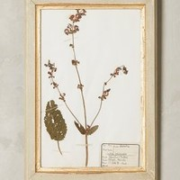 Pressed Herb Wall Art by Anthropologie in Light Grey Size: One Size Decor