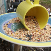 BIRD FEEDER, up-cycled from a Burgundy & Yellow Floral Cup and Saucer. Whimsical, Eye Catching, art for your yard, porch.  Chain included.