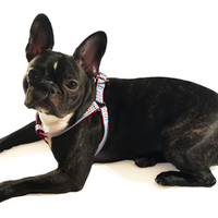 Chicago Flag Step-in Dog Harness