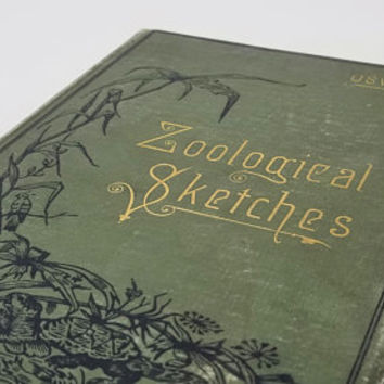 Zoological Sketches A Contribution to the Outdoor Study of Natural History Felix L Oswald 1883