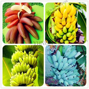 100pcs/bag Banana Seeds,dwarf fruit trees,delicious Perennial Fruit Seeds For home and Garden plants