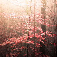 Nature Photography - Pink LIght - photo print, dreamy pink colors, romantic, peaceful, nursery art, girls, forest, trees, fpoe
