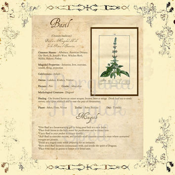 MAGICK HERB BASIL, Digital Download,  Book of Shadows Page, Grimoire, Scrapbook, Spells, White Magick, Wicca, Witchcraft, Herb Magic