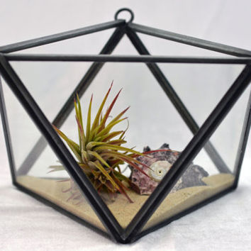 Modern Geometric Terrarium - Black - Air Plant Terrarium  -Green Gift - Home Decoration