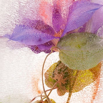 """FineArt Photography """"ENTANGLED"""" Limited Edition Acrylic Face Mount Print TableTop Decor ArtWork Gift"""