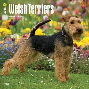 Welsh Terriers Wall Calendar, More Dogs by BrownTrout