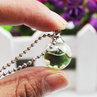 1PC 16/18/20/25mm Orb Live Marimo Moss Ball Terrarium Necklace, Wood and Living Marimo Moss Ball Glass Plant