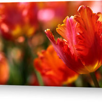 """""""Passionate"""" Greeting Cards & Postcards by JUSTART   RedBubble"""