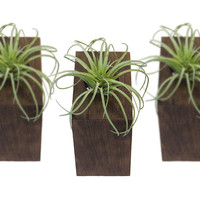 Air Planter, Wall Planter, Tillandsia Planter, Air Plant Holder, Ionantha Holder, Wood Planter, Modern Planter, Mini Planter - Set of 3