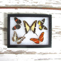 20% OFF SALE / Vintage Framed pressed Butterflies. Specimen box with brown and yellow butterflies. Wall hanging picture