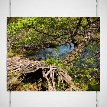 20% OFF Mississippi Tree Roots Print, Gnarled Trees, Lake Trail, Green Decor, Vines and Root Forest Photography