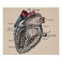 Vintage Anatomical Heart Diagram Print