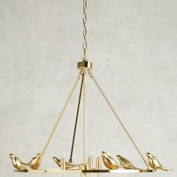 Golden Perch Chandelier