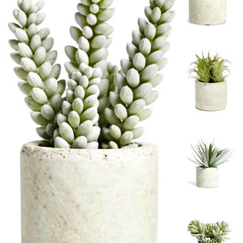 Faux Cement Potted Mini Succulent Plant Gifts