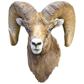 Mountain Retreat Ram Mount Wall Decal