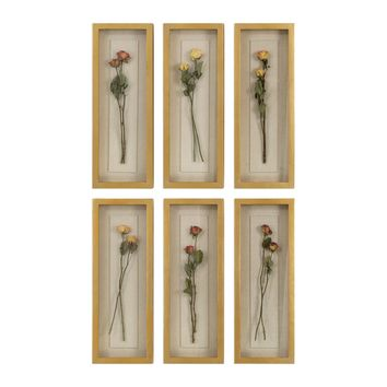 Rosalie Preserved Long Stemmed Rose Shadow Box Wall Decor, Set of 6 by Uttermost