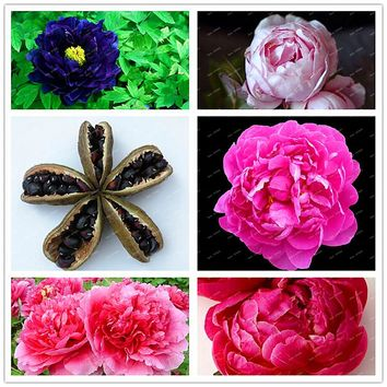 2017 Rare Heirloom Robust Mixed Colorful Double Blooms Peony Flower  Seeds, Professional Pack, 2 Seeds / Pack, Easy Care Plants