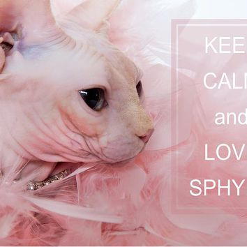 Keep Calm And Love Sphynx Cat Greeting Card